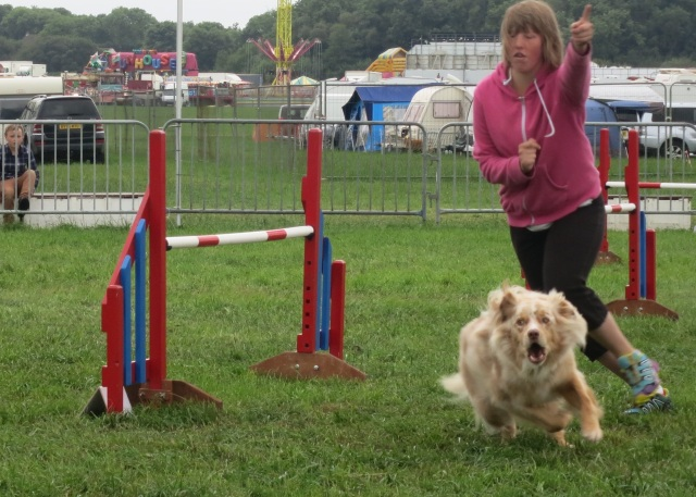 dog agility pembrokeshire county show 3