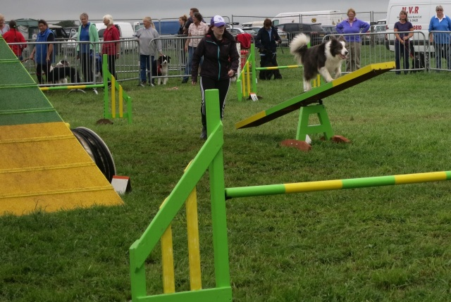 dog agility pembrokeshire county show seesaw