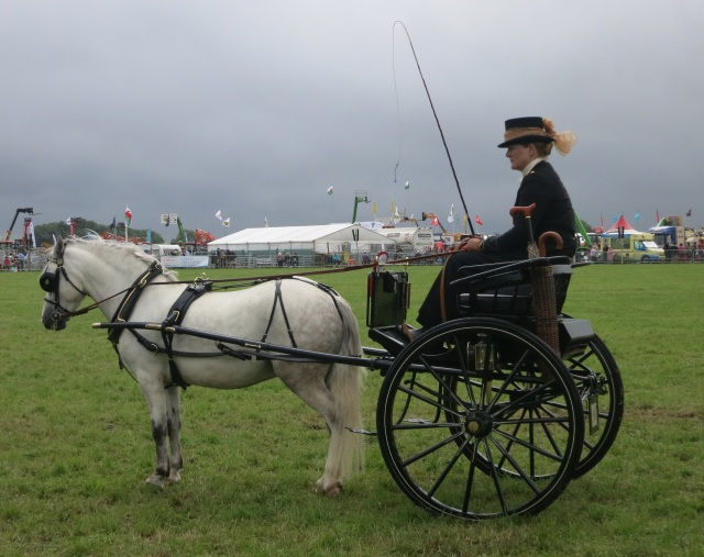 horse and cart pembrokeshire county show