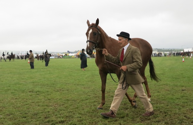 horse pembrokeshire county show