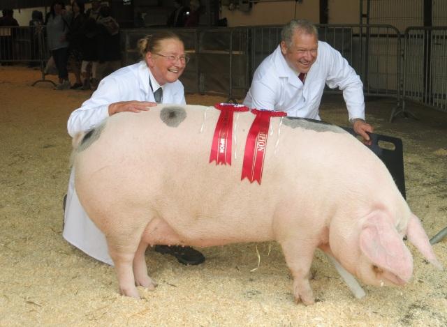 prize pig Pembrokeshire county fair
