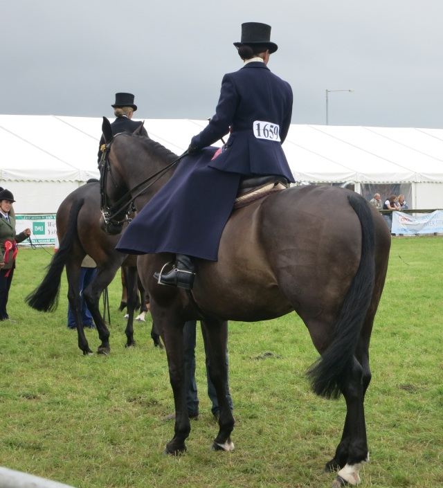 side saddle pembrokeshire county show